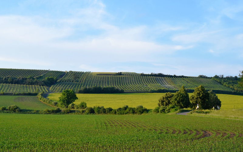 Austrian landscape. Agriculture Austrian Landscape Beauty In Nature Cloud - Sky Day Environment Farm Field Fields Green Color Growth Land Landscape Nature No People Plantation Rolling Landscape Rural Scene Scenics - Nature Sky Tranquil Scene Tree Wineyard Wineyards Wineyards In Spring