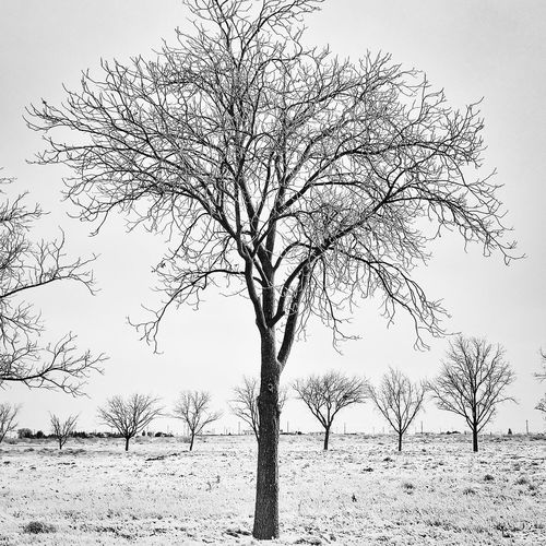 I didn't have much time to go out and shoot some pictures like I wanted due to the crazy weather we're having. But here it is! Photo 2/365. Trees Snow Weather EyeEm Best Shots Blackandwhite Iphone6plus IPSWinter Project365 New Mexico
