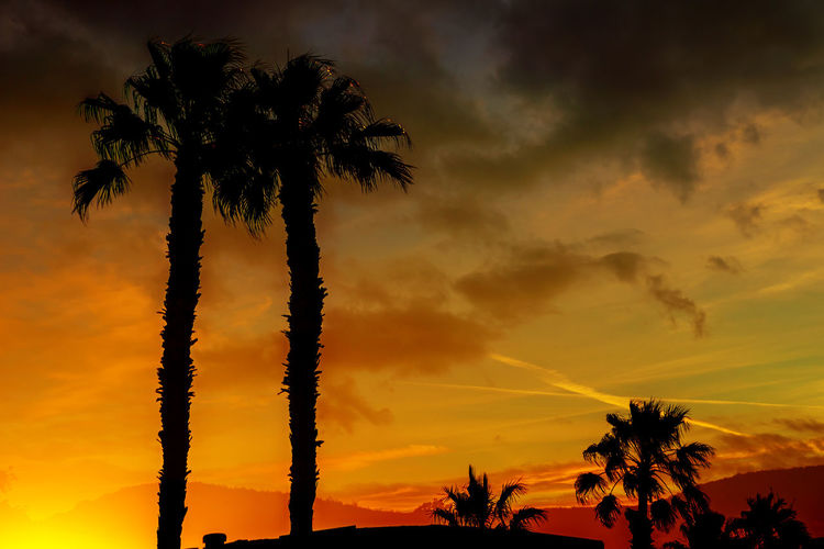 A beautiful sunset with orange and yellow colors in the sky the silhouette ountains and palm trees in the Arizona. Palm Tree Sky Sunset Tropical Climate Silhouette Beauty In Nature Coconut Palm Tree Scenics - Nature Arizona Desert Arizona Sunsets Arizona Mountain Landscape California Phoenix, AZ Phoenix Phoenix Arizona Sundown Sundown Landscape Yuma, AZ Yuma Sundown Arizona Southwestern Usa