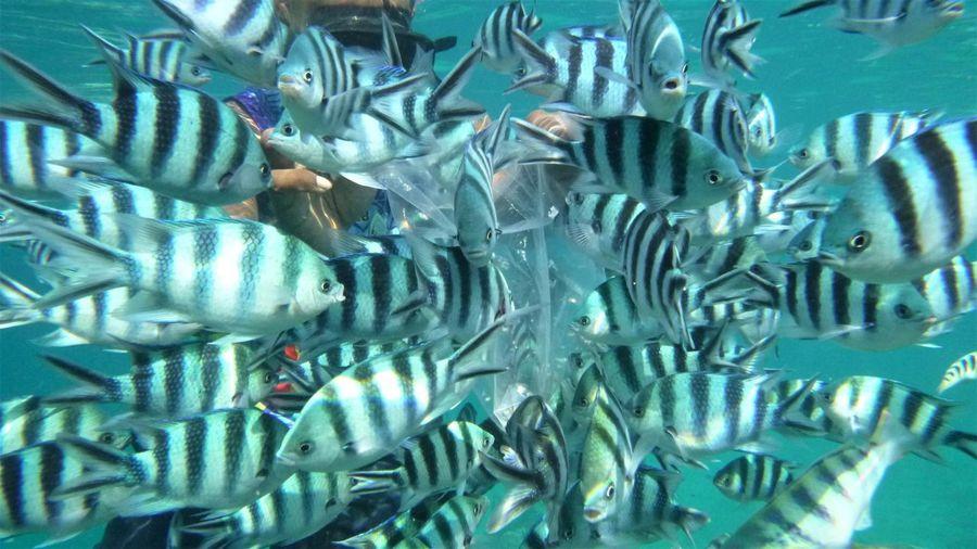 Water Sea Group