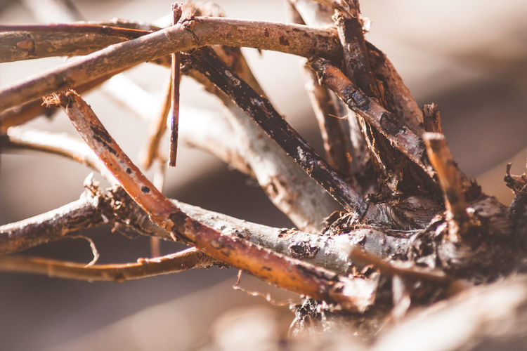 Close-up Selective Focus Plant Tree Day No People Nature Branch Winter Dry Cold Temperature Outdoors Focus On Foreground Twig Brown Rusty Sunlight Snow Frozen Dead Plant Stick - Plant Part Teleobjektiv Nature_collection EyeEm Nature Collection