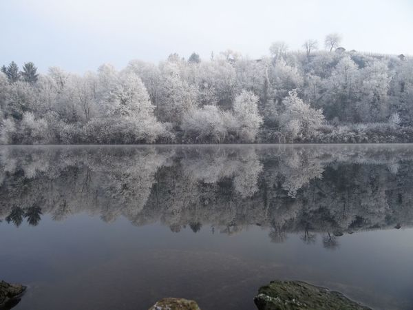 Tree Nature Water Reflection Beauty In Nature Perspectives On Nature Scenics Tranquil Scene Fog No People Lake Outdoors Winter Wonderland Neckar River New Year Winter White Frost Landscape Clear Sky Tranquility Idyllic Beauty In Nature Germany Frost Morning