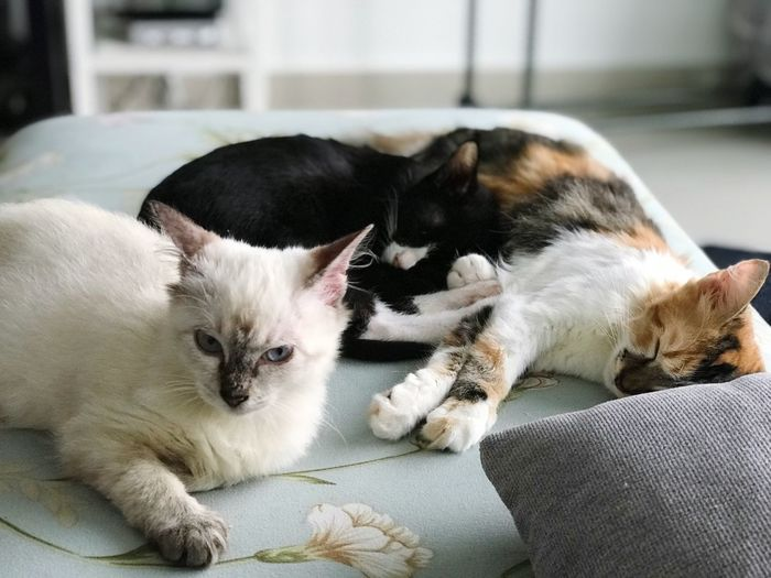 Cats relaxing at home