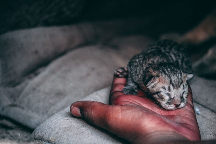 Kitten Kitten Cat Animal Themes Human Body Part One Animal One Person Pets Personal Perspective Domestic Animals Human Hand Real People Mammal Low Section Indoors  Lying Down Holding Animal Wildlife Close-up Only Men Animals In The Wild People Lifestyles