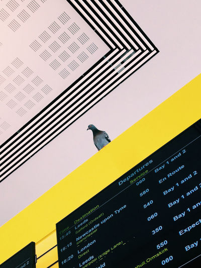 Animal Animal Themes Yellow Indoors  Built Structure Bird No People Text Low Angle View Letters Pigeon Pigeons Stripes Board One Animal Birds Pattern Geometric Shapes Geometric Lines Dynamic Composition