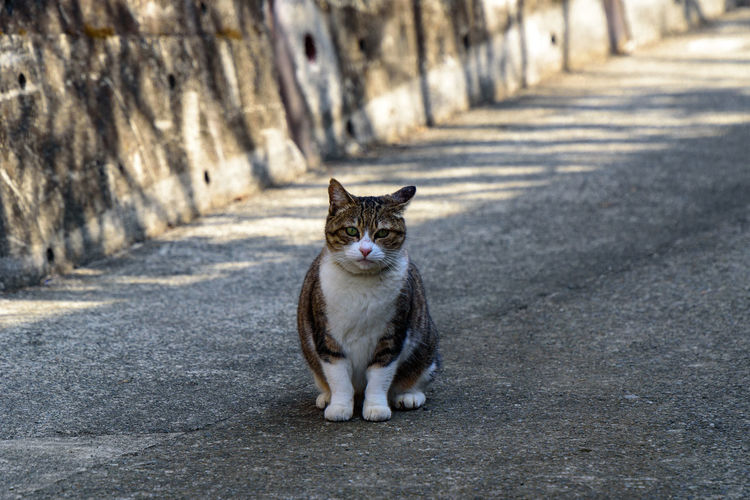 One Animal Animal Themes Domestic Animals Mammal Animal Pets Domestic Cat Feline Domestic Cat Vertebrate Looking At Camera Portrait Day Street Road No People City Footpath Sitting Outdoors Whisker