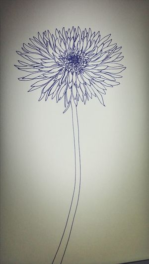 Drawing Art? A Flower at summer night
