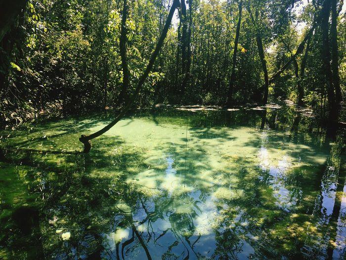 Brotas, SP - Brasil areia que canta Water Nature Outdoors First Eyeem Photo