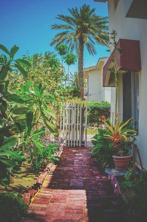 Backyard View Eyeem Bahrain Chill Mode Home Sweet Home