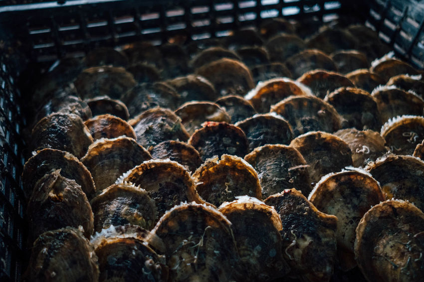 At the oyster farm. Seafood Asian Food Basket Close Up Close-up Day Freshness No People Oysters Shells