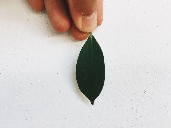 Leave, green, light, life, ใบไม้ ,เชียว
