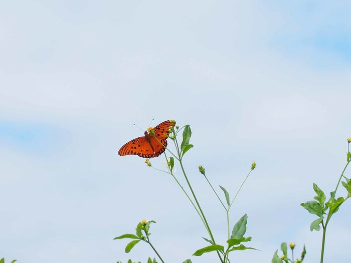 Low Angle View Of Brown Butterfly On Flower Against Cloudy Sky