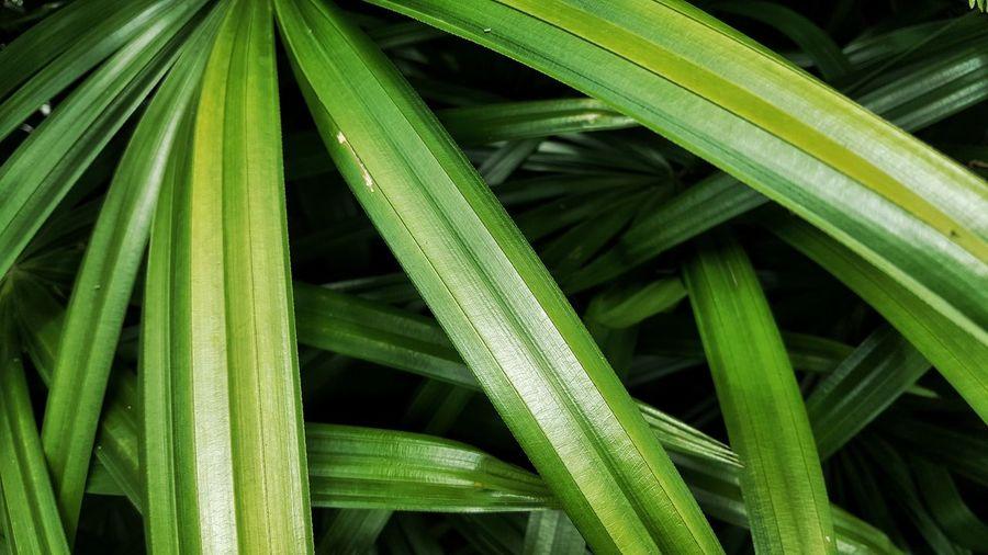 Science Biology Backgrounds Full Frame Close-up Plant Green Color Grass Plant Life Botany Blossom Pistil Focus Leaf Vein Magnification Living Organism Leaf Leaves In Bloom Blooming