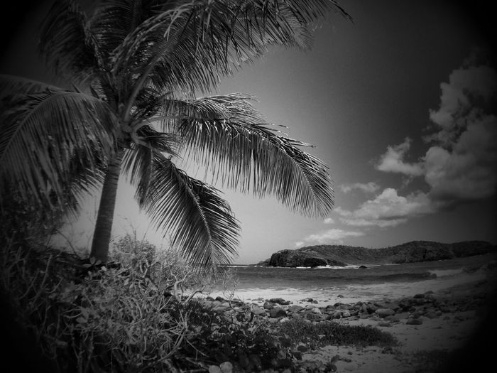 My heart is anchored here in My Paradise Eyem Black And White Palm Trees