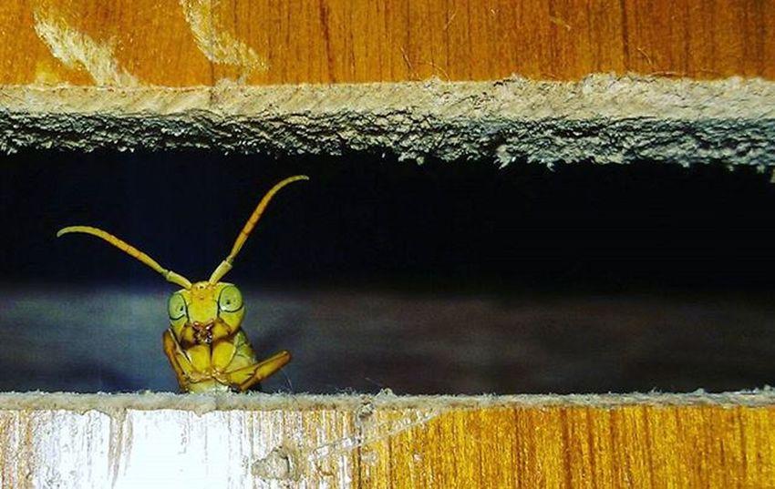 Hallo guys. ... Wasp Wildlife Insect Wildlifephotography Indianphotographers Zoology Aligarhmuslimuniversity Aligarh Naturelovers Nature_perfection Naturephotographer Naturephotography Macromood Mobilephotography
