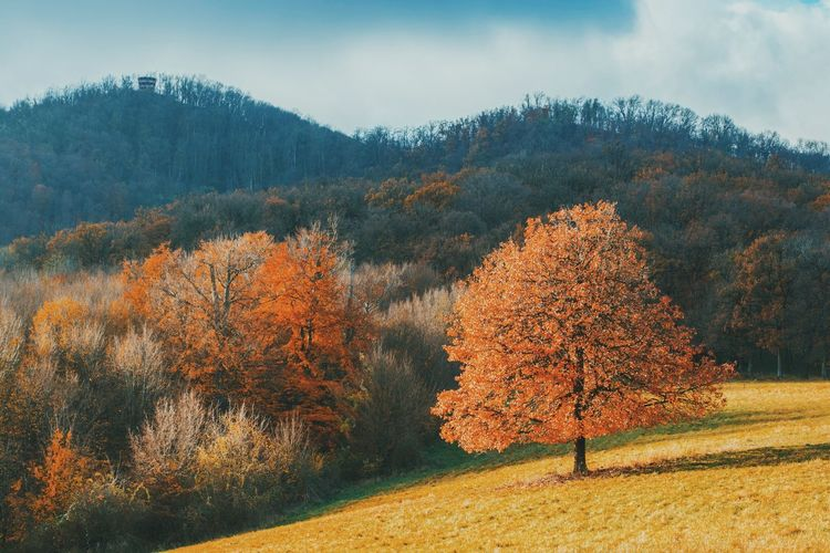 Autumn Autumn Colors Fall Colors Hungary Mountain View Autumn Beauty In Nature Fall Fall_collection Field Landscape Mountain Mountain Range Nature Nature_collection Naturelovers No People Outdoors Scenics Tranquil Scene Tranquility Tree