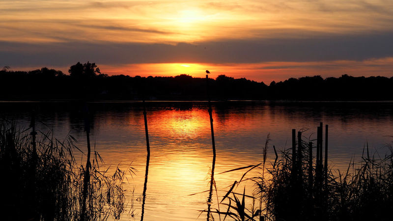 Sonnenuntergang Am See Beauty In Nature Cloud - Sky Idyllic Lake Nature No People Non-urban Scene Orange Color Outdoors Plant Reflection Romantic Sky Scenics - Nature Seeufer Silhouette Sky Sonnenuntergang Im Sommer Sunset Tranquil Scene Tranquility Tree Water