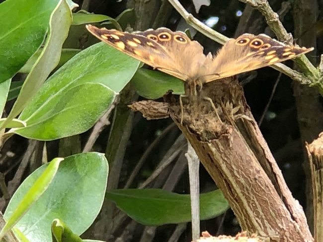 Butterfly 🦋 😚 Paimpol Eye😍 👸👑💄💎💋 🚶🏻♀️🚶🏻♂️ Butterfly💓 Flowers 🌸🌸🌸 Plant Plant Part Leaf Animals In The Wild Animal Wildlife Growth Animal Themes