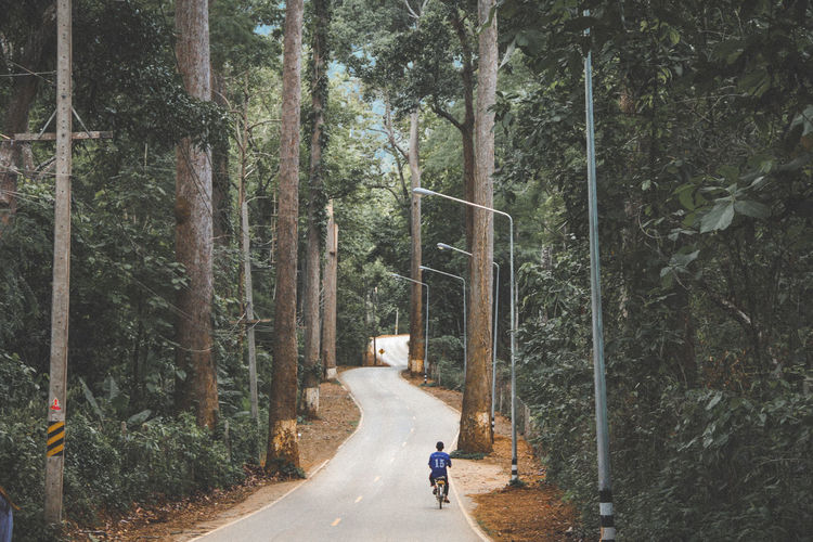 Person riding bicycle on road amidst trees in forest