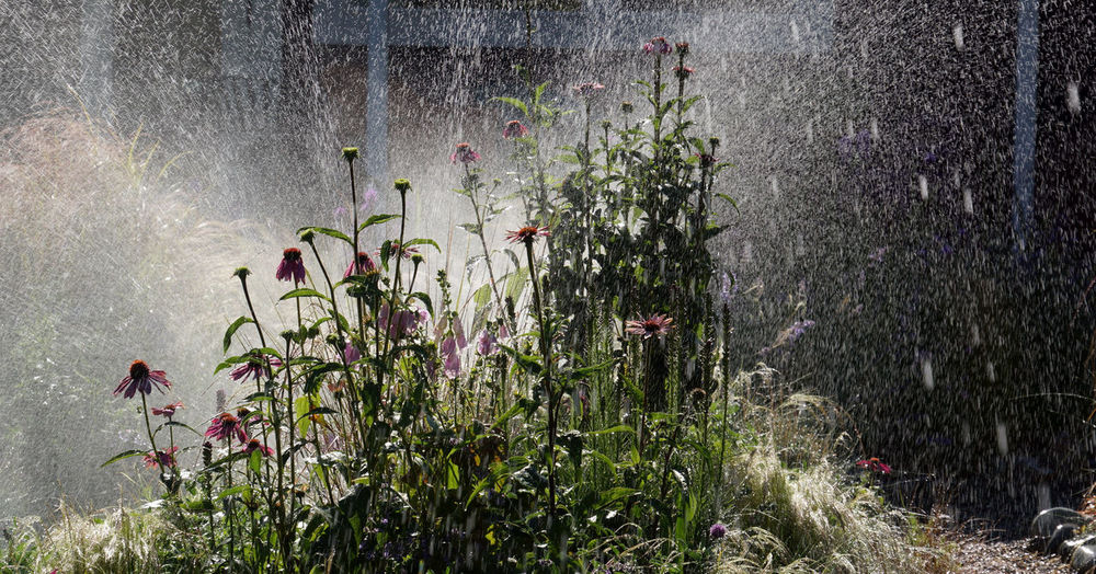 Flowers against spraying water in a sunny day