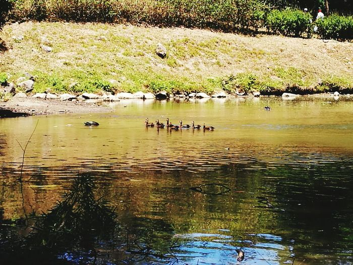 The Week On EyeEm Ducks Lake View Lake Naturephotography