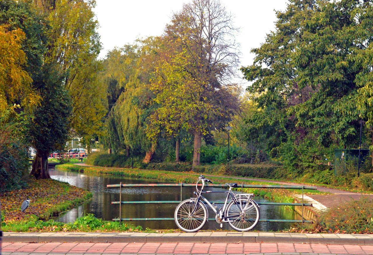 tree, bicycle, autumn, transportation, cycling, outdoors, scenics, nature, no people, day, beauty in nature, tree area, sky, water