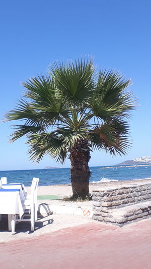 Beach Beauty In Nature Clear Sky Day Horizon Over Water Nature No People Outdoors Palm Tree Sand Scenics Sea Sky Sunlight Tranquility Tree Water