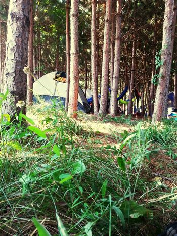 Looking back at camping in the forest! SummerSetMusicFestival Musicfestival Somerset Wisconsin 2015  Edm ❤ Edmlife Hanging Out Enjoying Life
