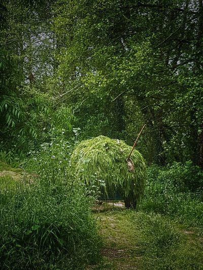 Nature hierba cantabria verde primavera campo greenp EyeEmNewHere
