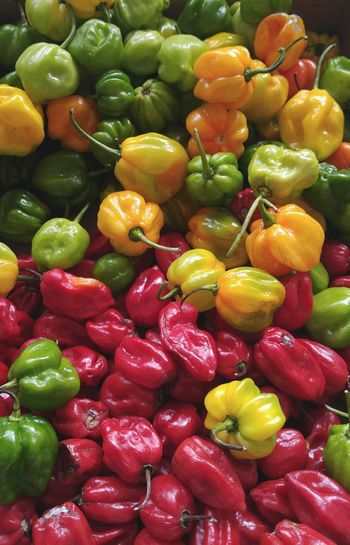 Healthy Eating Fruit Food And Drink Freshness Food Vegetable Healthy Lifestyle Organic Yellow Full Frame Backgrounds Abundance Green Color No People Variation Red Large Group Of Objects Vegetarian Food Gourmet Peppers Pepper Colorful Peppers Habanero Habanero Peppers Habanero Yellow