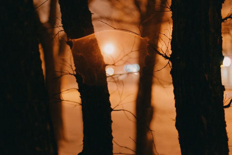 Close-up of illuminated tree trunk at night