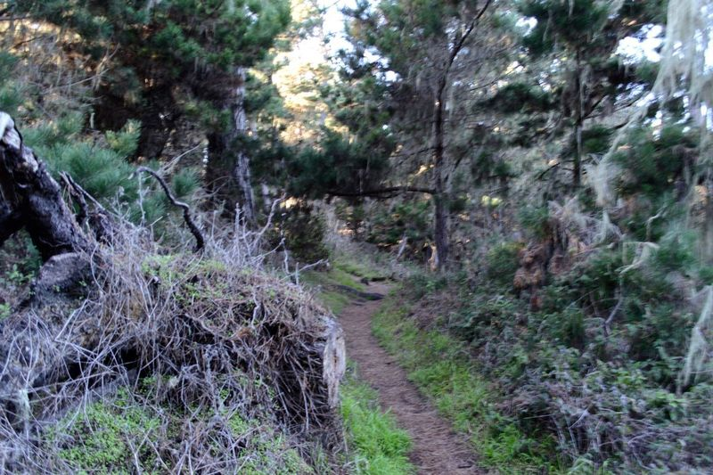 Trails Nature Hike Point Lobos State Park CA Plant Tree Growth Forest Land Tranquility Nature No People Direction Tranquil Scene The Way Forward Day Beauty In Nature Footpath Green Color Non-urban Scene Scenics - Nature Outdoors Dirt