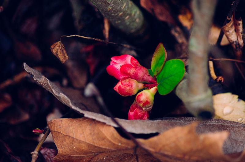 Flowers Winter Morning Parc Montsouris Paris France