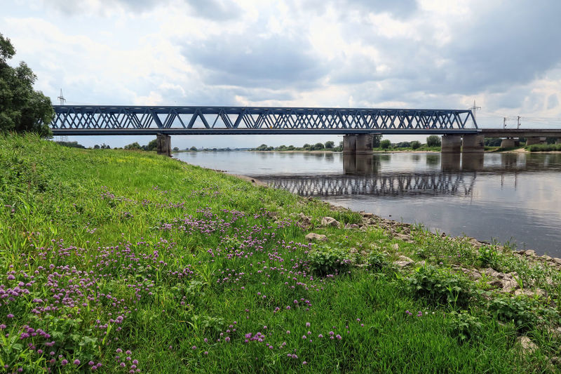 Railroad bridge over Elbe river and its typical meadows in summer time. located next to Tangermuende, Saxony-Anhalt (Germany). Architecture Bridge Bridge - Man Made Structure Built Structure Chive Chives Cloud - Sky Day Elbe Elbe River Elberadweg Germany Grass Green Color Nature No People Outdoors Plant Railroad Railroad Bridge Saxony Anhalt Saxonyanhalt Sky Tangermünde Water