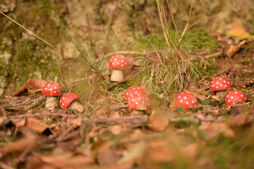 Fake Mushroom Beauty In Nature Close-up Day Field Food Food And Drink Freshness Fruit Fungus Growth Land Mushroom Nature No People Outdoors Plant Red Selective Focus Toadstool Tranquility Vegetable