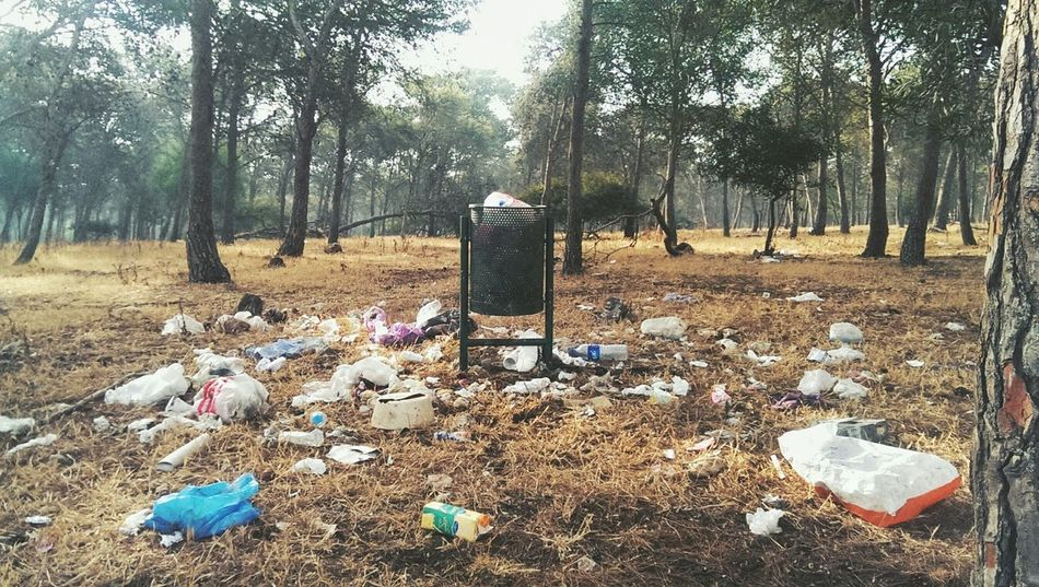 Pollution Forest Nature Irresponsible Human Globalwarming Junk Dechet Park Dirt Dirty Badcondition Behavior