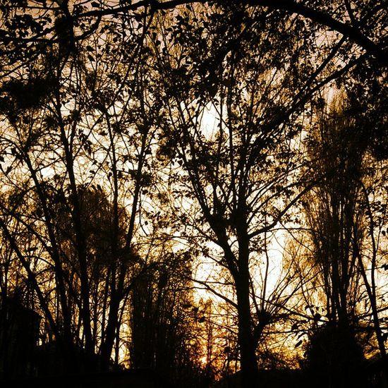 Autumn in Kiev🍂 Kievautumn Winteriscoming IloveKYIV Kyivautumn
