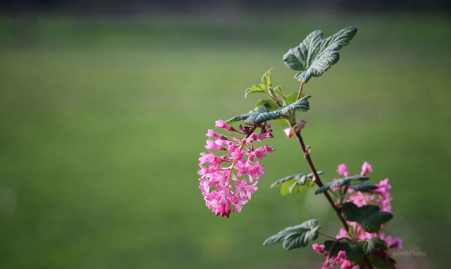 Treeblossoms Branch Focus On Foreground EyeEm Nature Lover Close Up Pink Flowers,Plants & Garden Nature Plant Spring2017 Springtime Outdoors Beauty In Nature