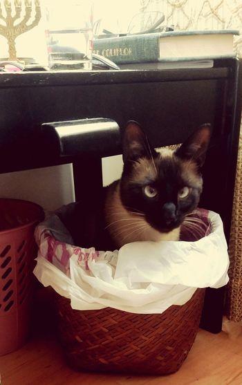 Pets Kitten Sitting Feline Domestic Cat Bathroom Domestic Bathroom Portrait Looking At Camera Animal Themes
