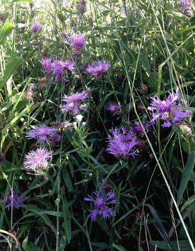 EyeEm Nature Lover Nature Flowers