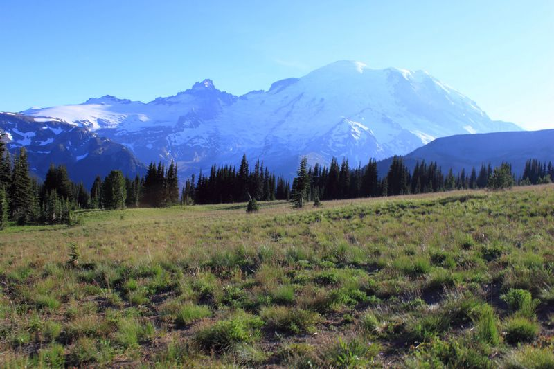 """Wonder"" MountRainier Mount Rainer National Park National Park Nature Mountain Blue Beauty In Nature Scenics Landscape Tranquil Scene Tranquility Outdoors Idyllic Non-urban Scene Clear Sky Mountain Range Day No People Sky Snow Wilderness Area Grass Mammal"