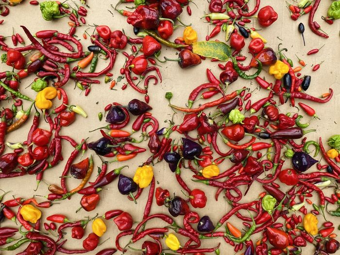 High angle view of chili peppers