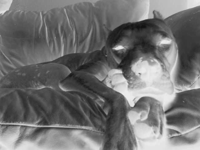 Dogs Taking Photos Blackandwhite Photography Negative Effect Check This Out Cute Pets
