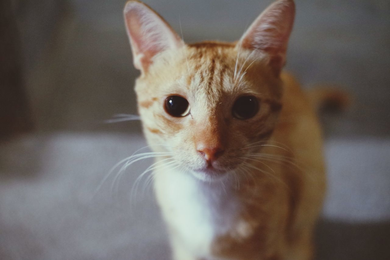 PORTRAIT OF CAT