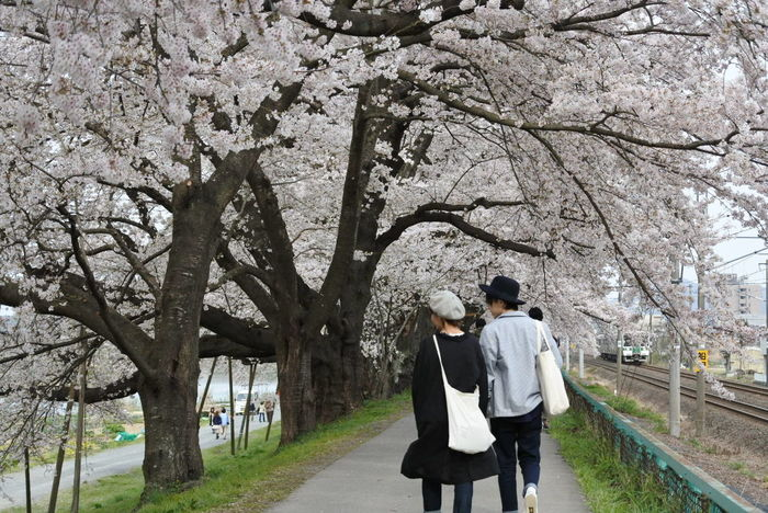桜 Sakura Sakura2016 Couple さわやか