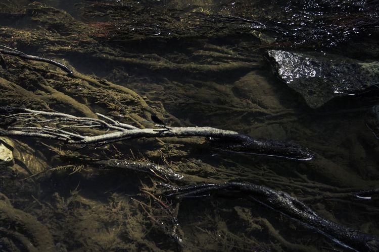 High Angle View Of Roots At Lake