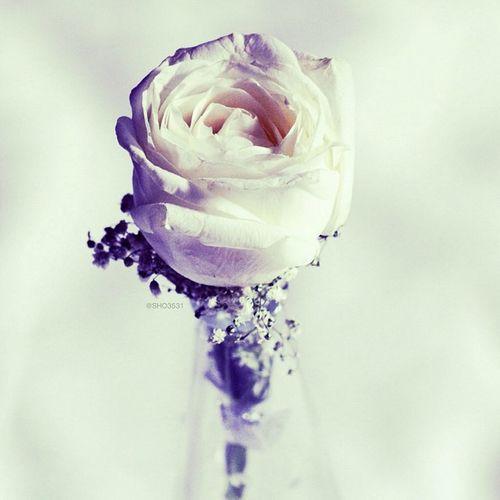 الراحة أن تفقد الذاكِرة ، كأن لا أحد جرحك قبلاً ؛ كأن الفقد لم يمّد يده إلى أحبابك . . وكأنك وِلدت تواً مُعافى من الذكريات *