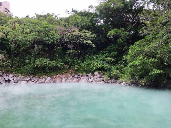 地熱谷 Taiwan Backgrounds Plant Water Tree Nature Beauty In Nature Growth No People Lake Tranquility Green Color Day Scenics - Nature Non-urban Scene Tranquil Scene Waterfront Outdoors Sky Idyllic Forest