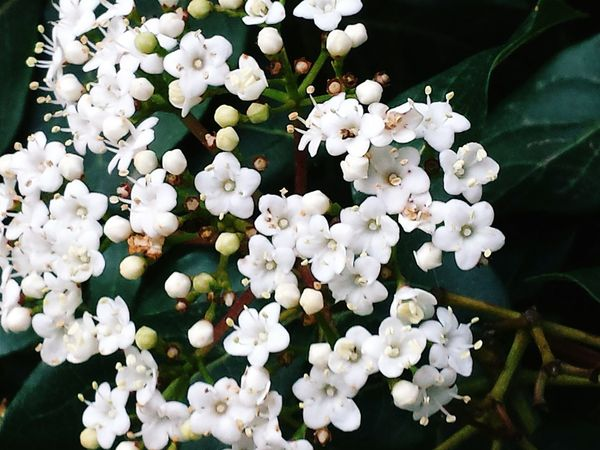 Beauty In Nature Nature_collection EyeEm Best Shots EyeEm Nature Lover EyeEm Gallery White Color Flower Freshness Nature No People Growth Petal Plant Leaf Close-up Outdoors Blooming Flower Head Day