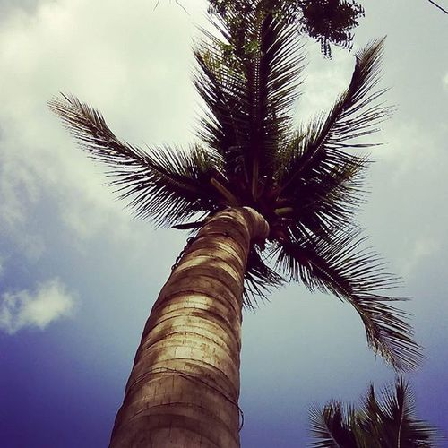 Learn Character from Trees, value from Roots and change from Leaves. 🌴 Tree Captured Sky Clouds Photography Instadaily Pys